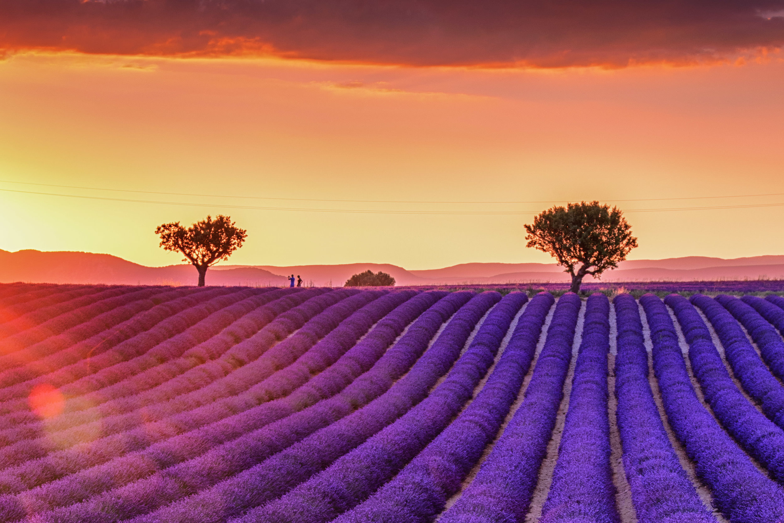 FANCY LAVENDER SMELL AND AMAZING LANDSCAPES? -