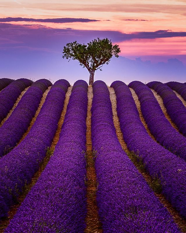 Autumn is knocking at the door! A perfect moment to think back to the past lavender season in the beautiful Provence. The warm weather of Provence and the scents of the Lavender fields from my last photo tour are still very strong in my memory! This chilly weather is a good excuse for planning the next one! 😀⠀ ⠀ I'll be there next summer leading my Provence Lavender workshop. Check the link in BIO for more info ✌🏼😄⠀ .⠀ .⠀ .⠀ #skylum #lings #provence #valensole #lavender⠀ #naturephoto #france_vacations #watchthisinstagood #landscape_captures #awesomeearth #ourplanetdaily #instanaturelover #nature_prefection #welivetoexplore #EarthVisuals #france_vacations #france_photolovers #unlimitedfrance #exclusive_france⠀