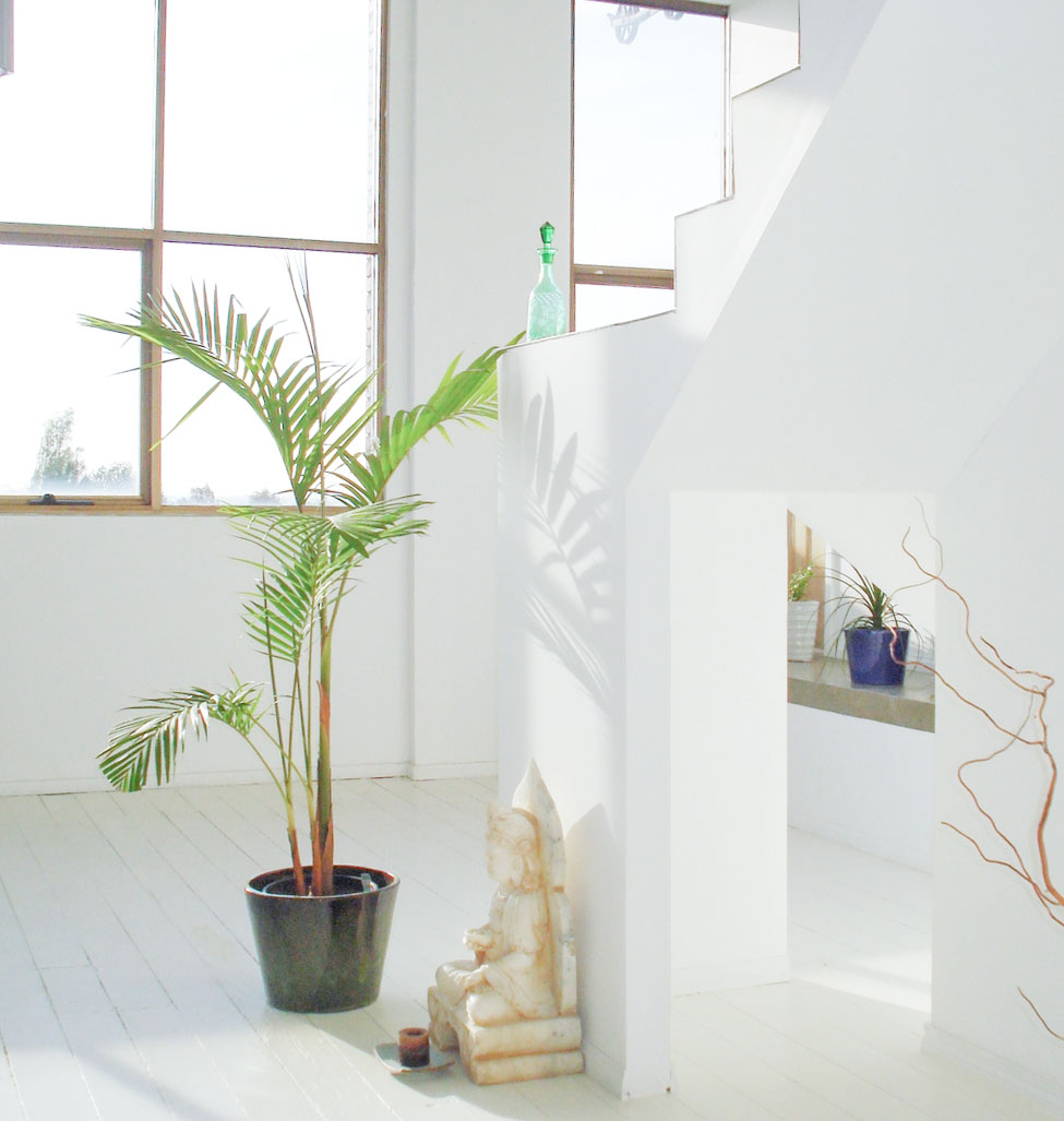 PH-Green-Plant.jpg