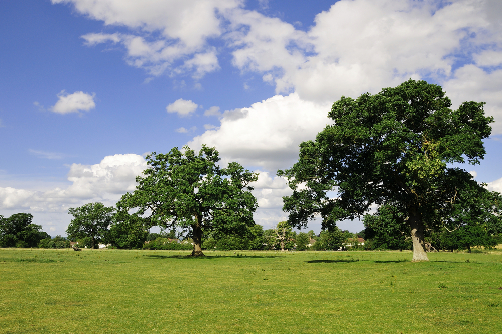 HEALTH PARKS INITIATIVE - You can help deliver your Parks and Green Spaces for health and wellbeing
