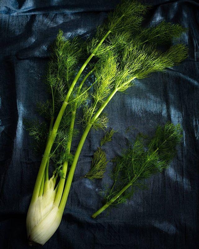 Fresh fennel from my local market