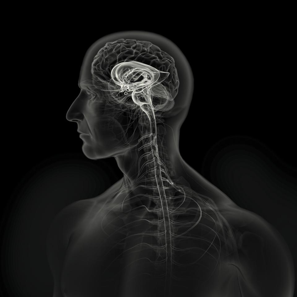 ZZOthers_Stern_brain_hi.jpg