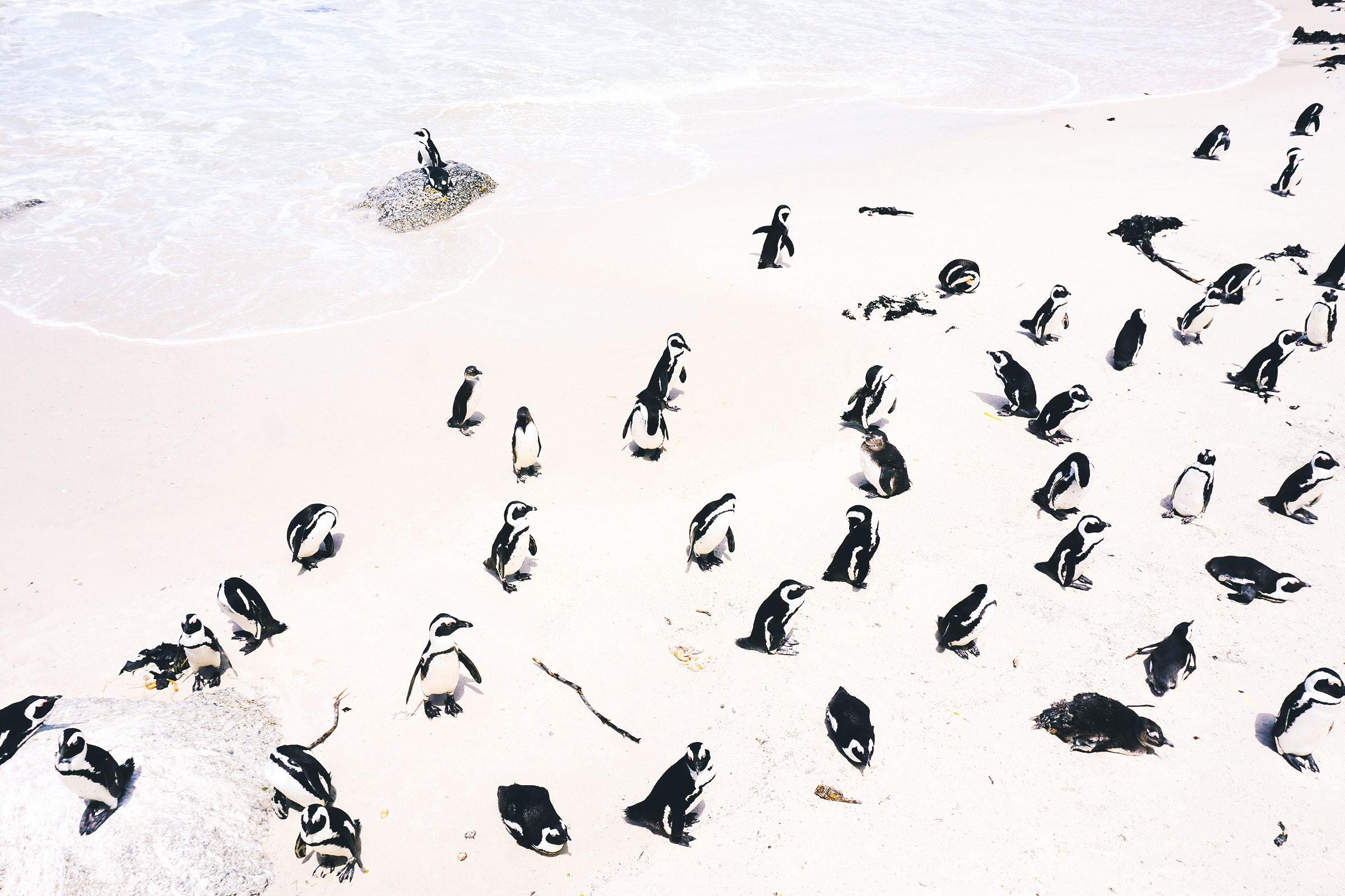 play-boulders-beach.jpg