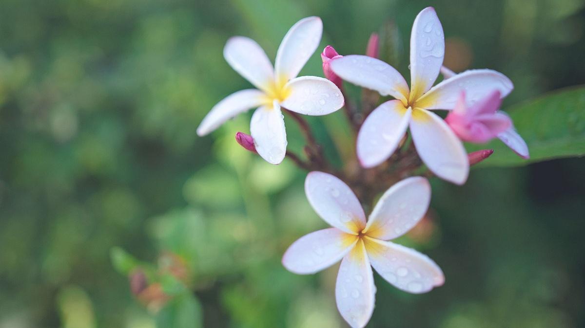 Constantia+flowers.jpg