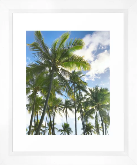 Hawaii Palms -