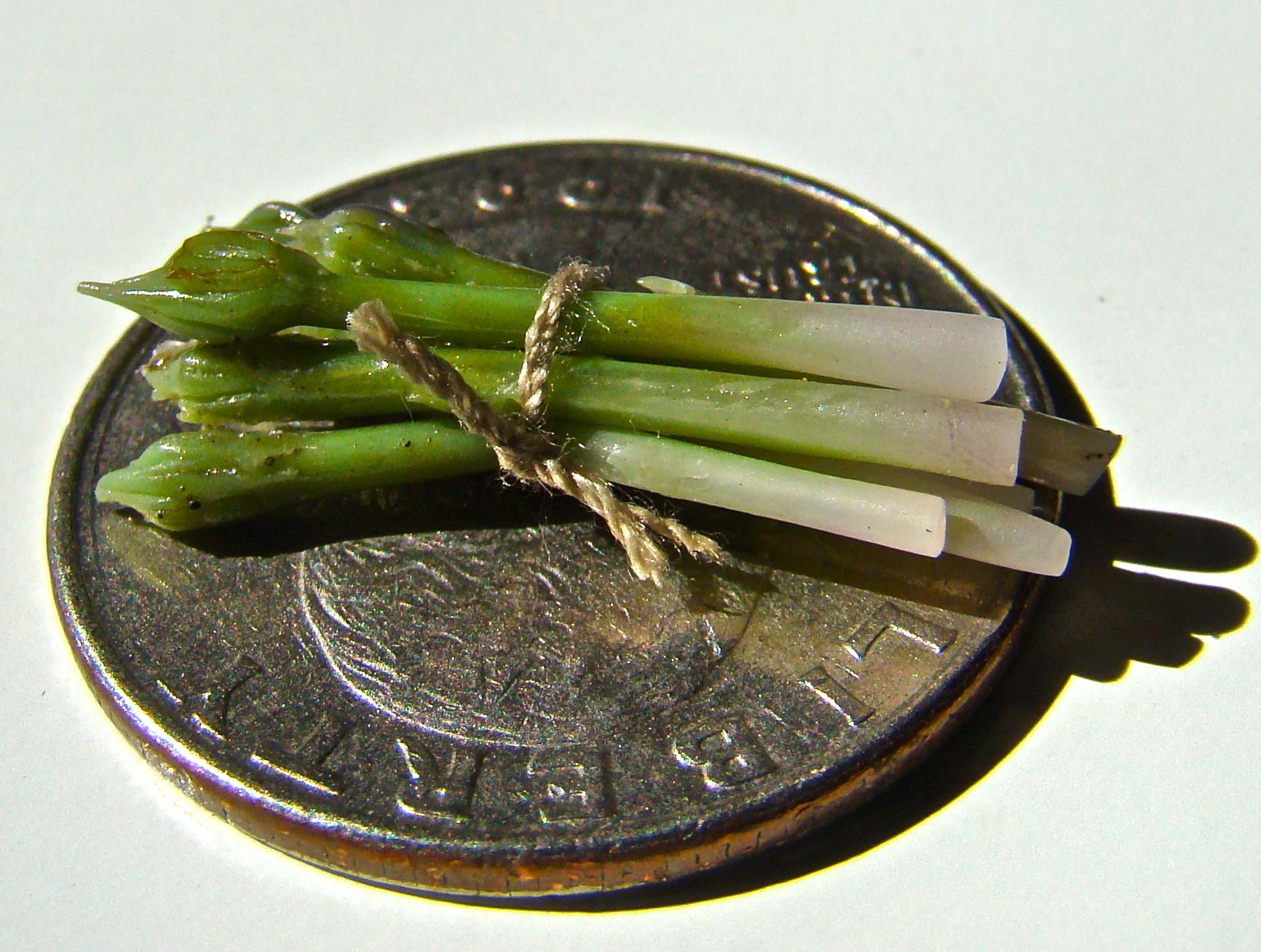 asparagusquarter.JPG