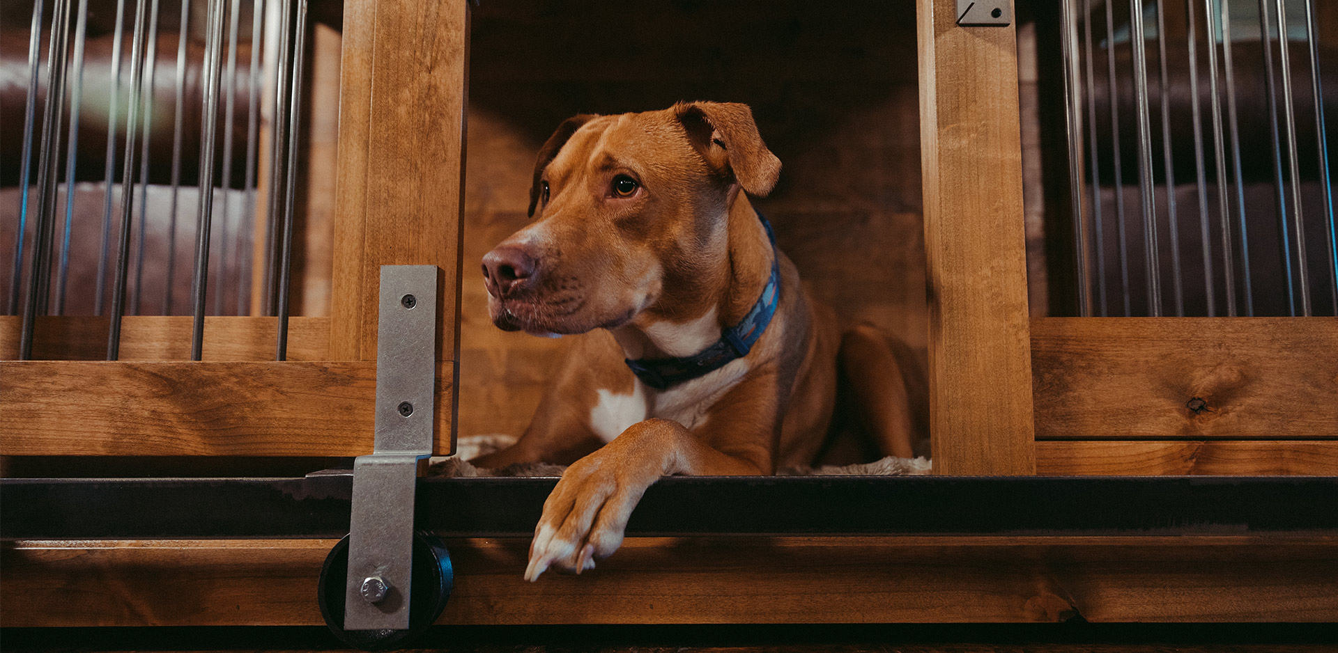 dog laying in a custom made kennel with barn doors