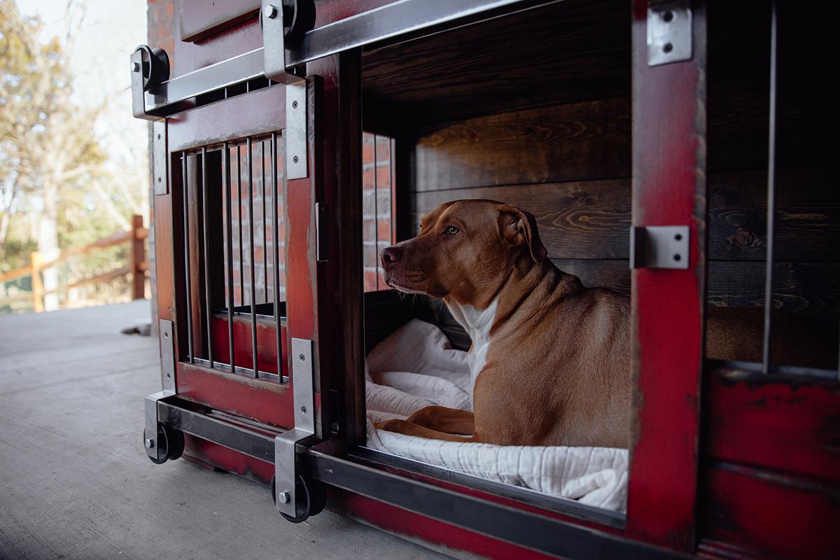 bulldog smiling in a crate
