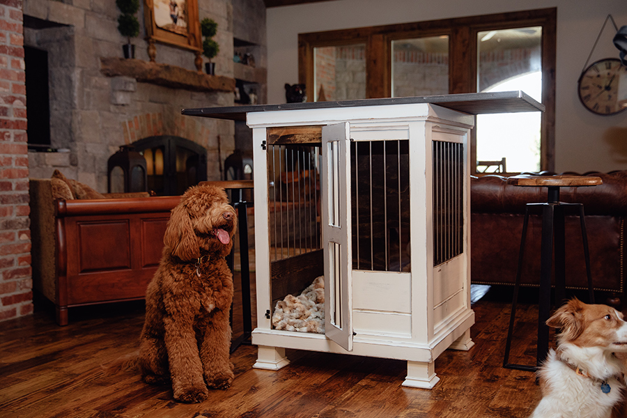 doodle dog sitting in front of custom desk and kennel