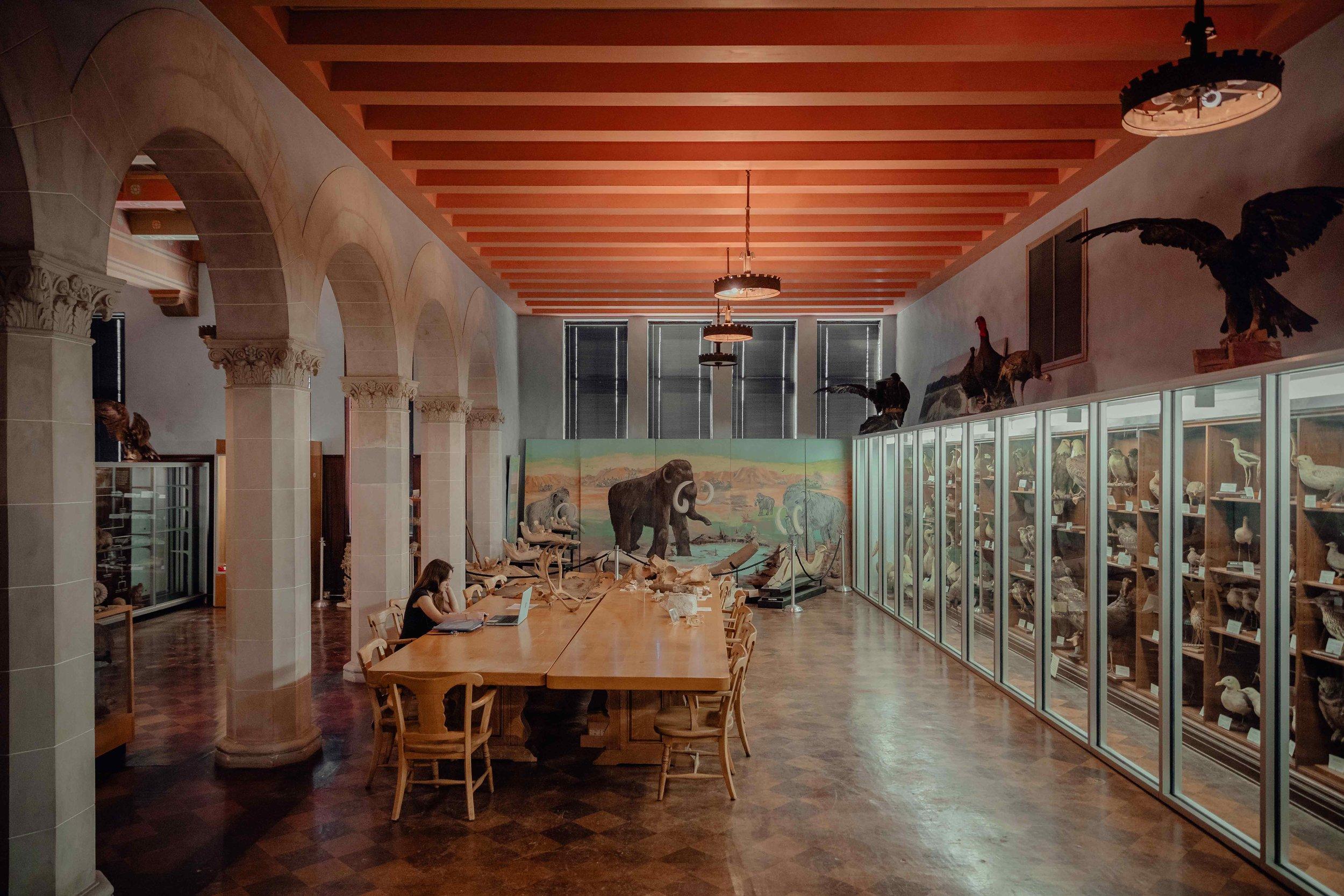 HighFiveMedia_MuseumofNaturalHistory_NWOSU.jpg