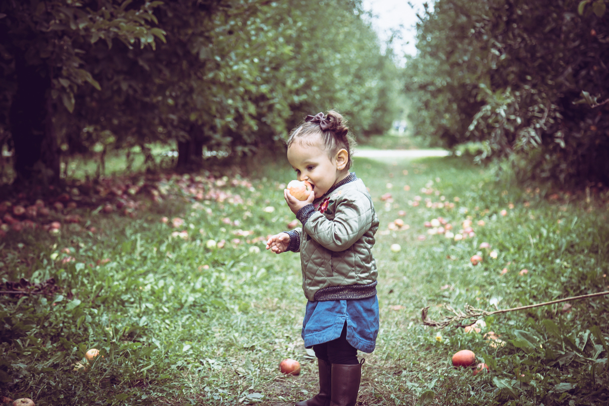Apple Picking - County Line Orchard - Hobart, IN