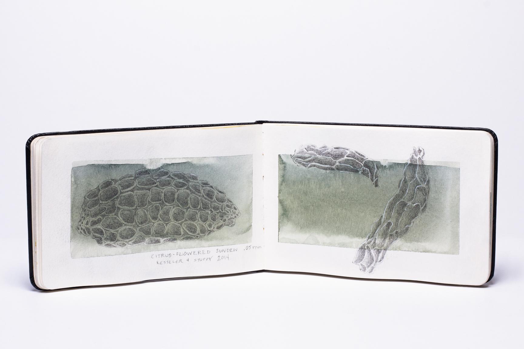 2019-moss-sketchbook-7-web.jpg