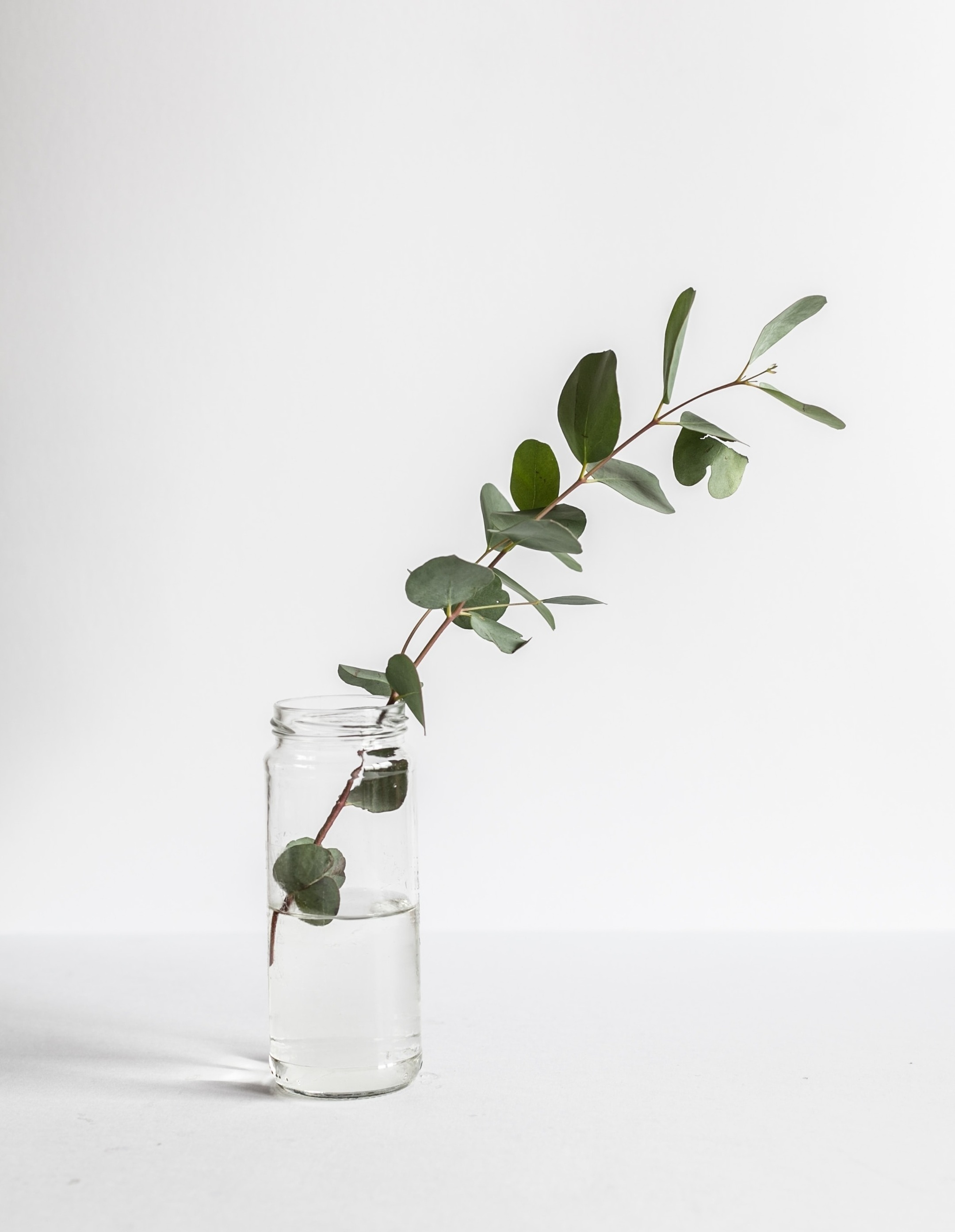 eucalyptus-in-water