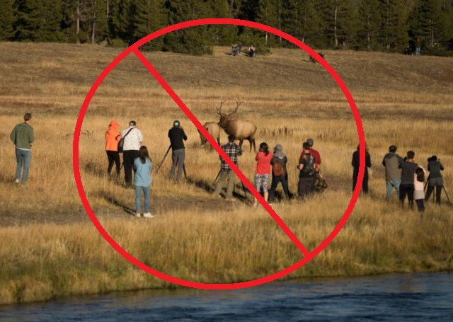 Don't be like these people! Please take your photos from a safe and respectful distance.  Trent Sizemore photo