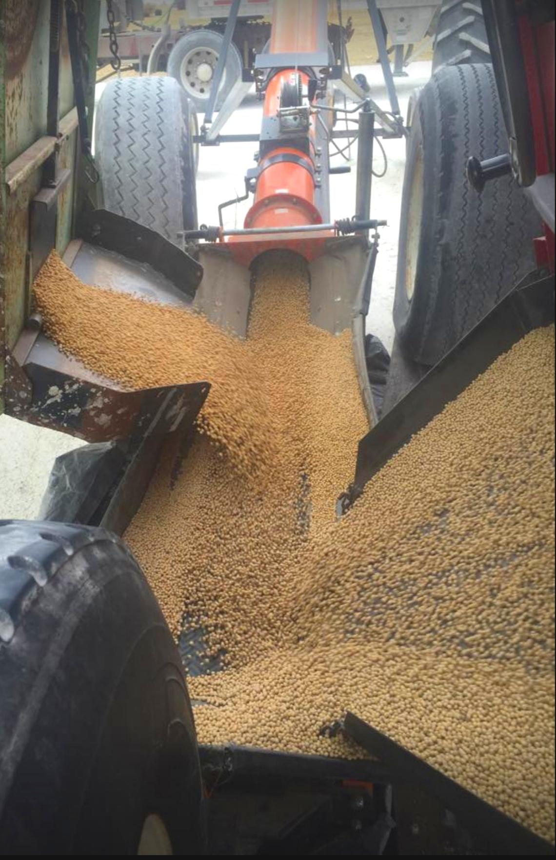 SoybeanHarvest.jpg