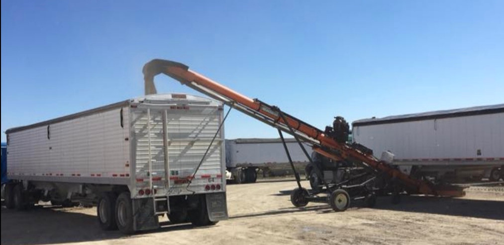Harold and Ross fill three semi-trailers with organic soybeans destined to become soy milk.