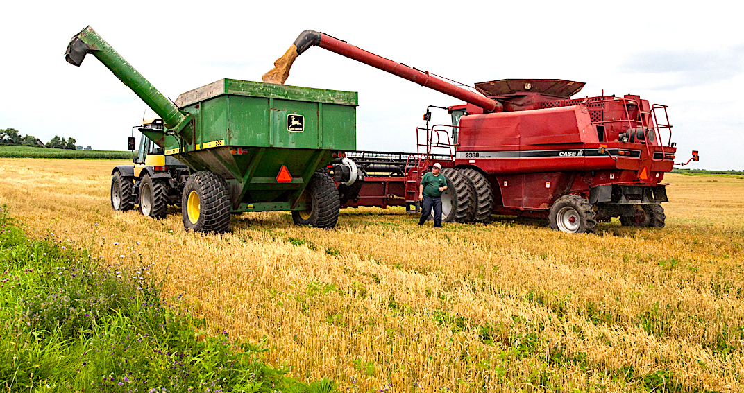 harold wheat harvest janies farm.JPG