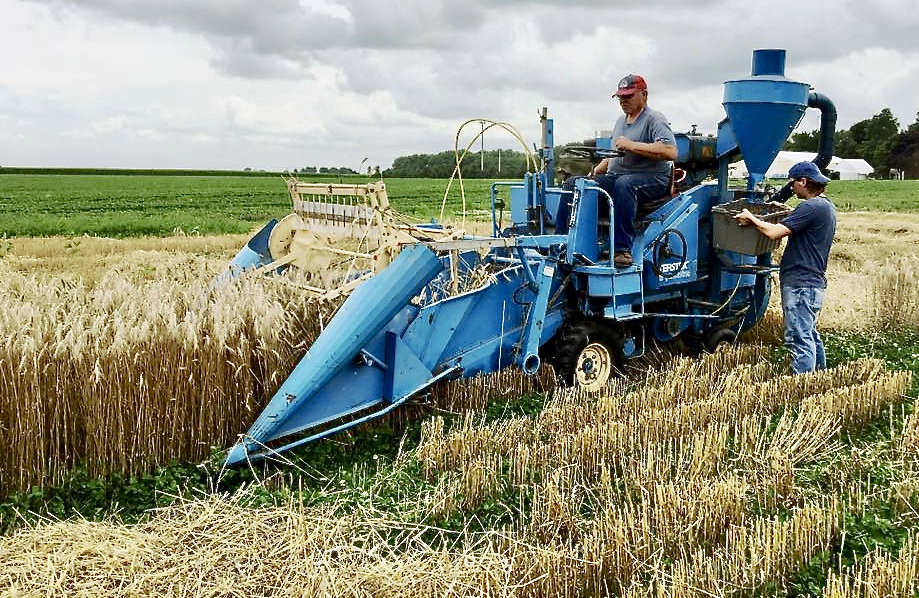 Harold collaborates with the University of Illinois in variety trials, and uses a small combine to harvest the test plots.