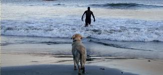 surf-thumb1.jpg
