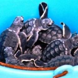 bucket of turtles.jpg