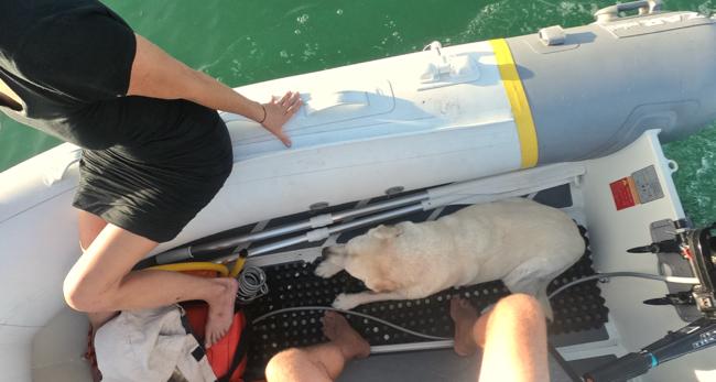 first dinghy.jpg