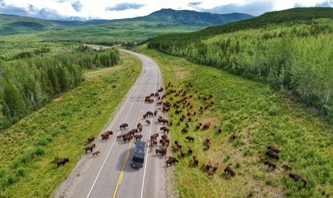 bison van.jpg