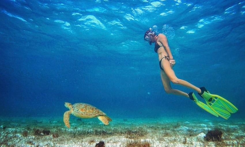 turtle snorkel.jpg