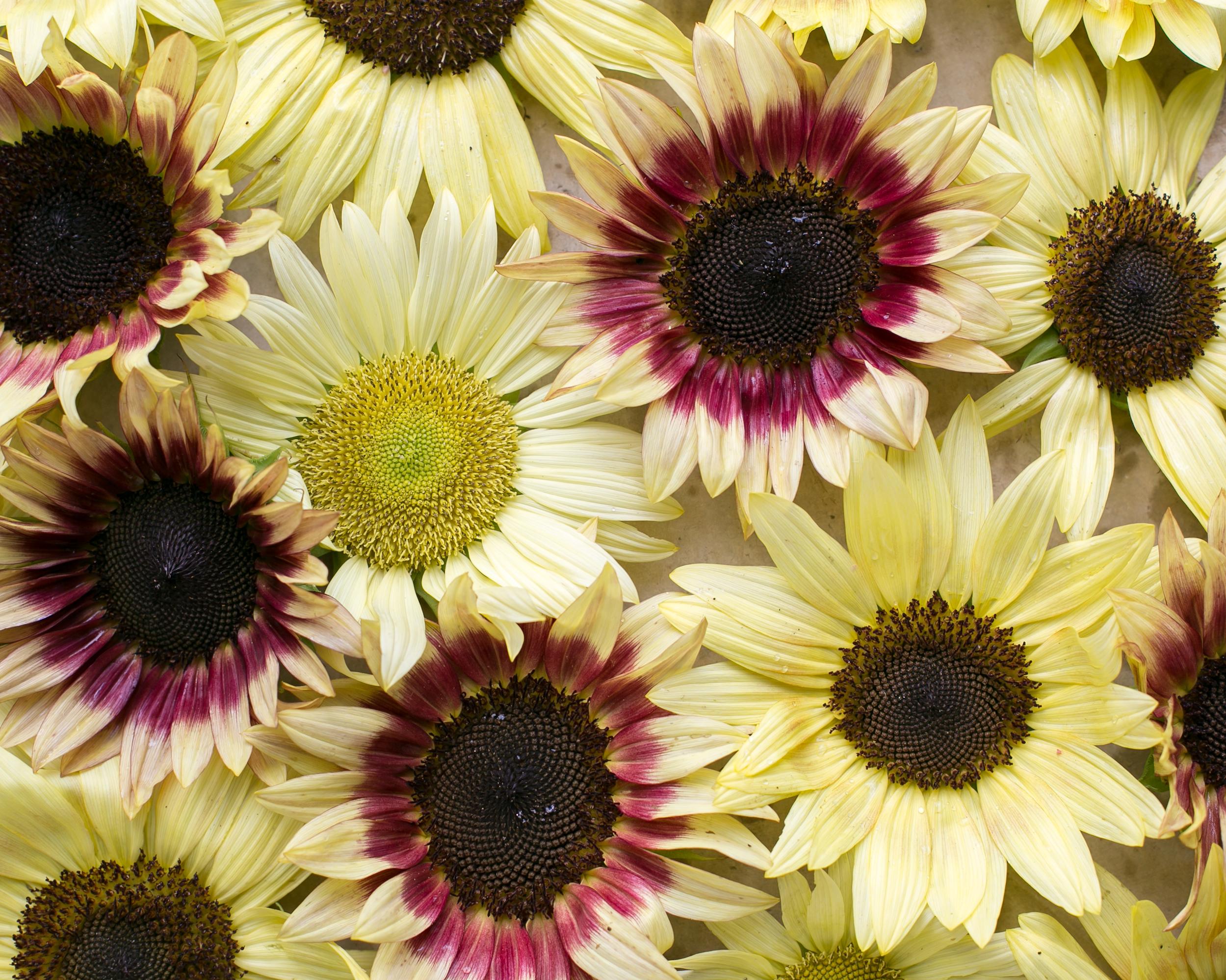 sunflowerparty-8.jpg