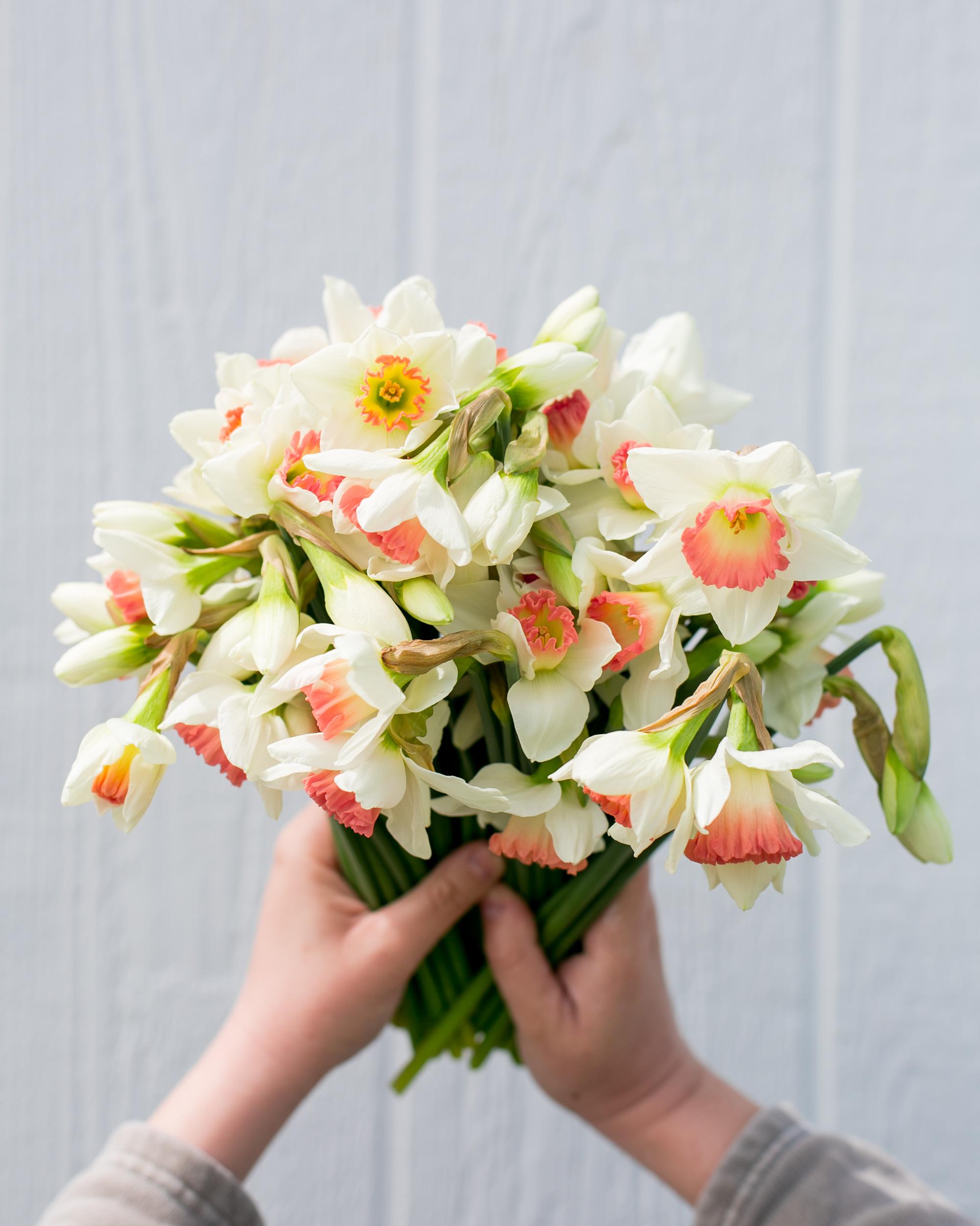 daffodil19-3.jpg
