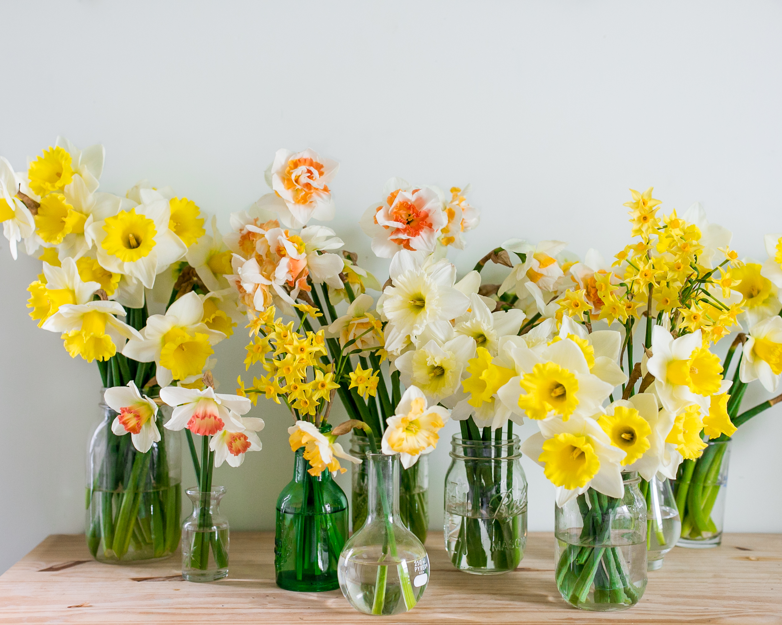daffodil19-1.jpg