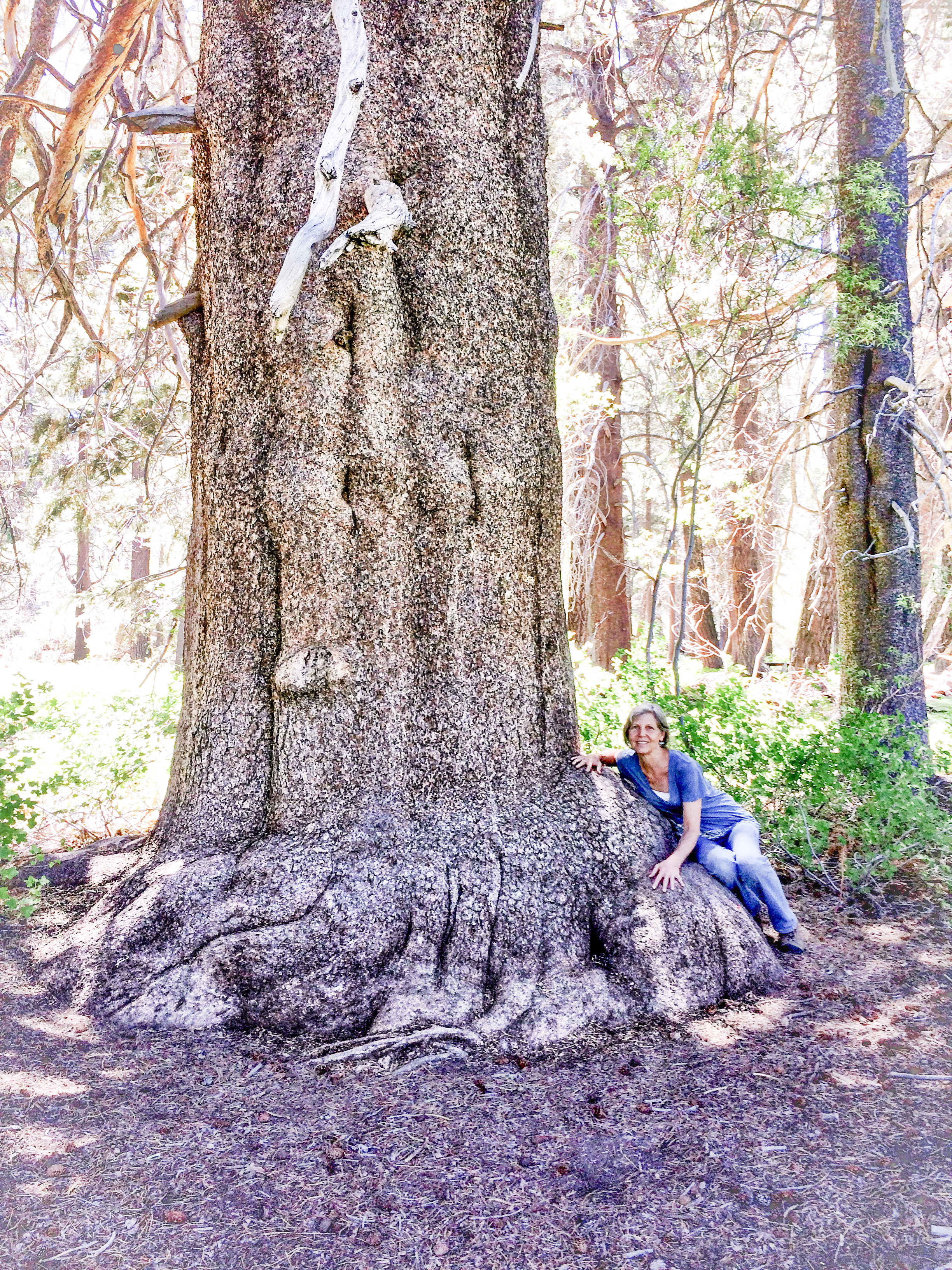Joan with champion lodgepole pine.jpg