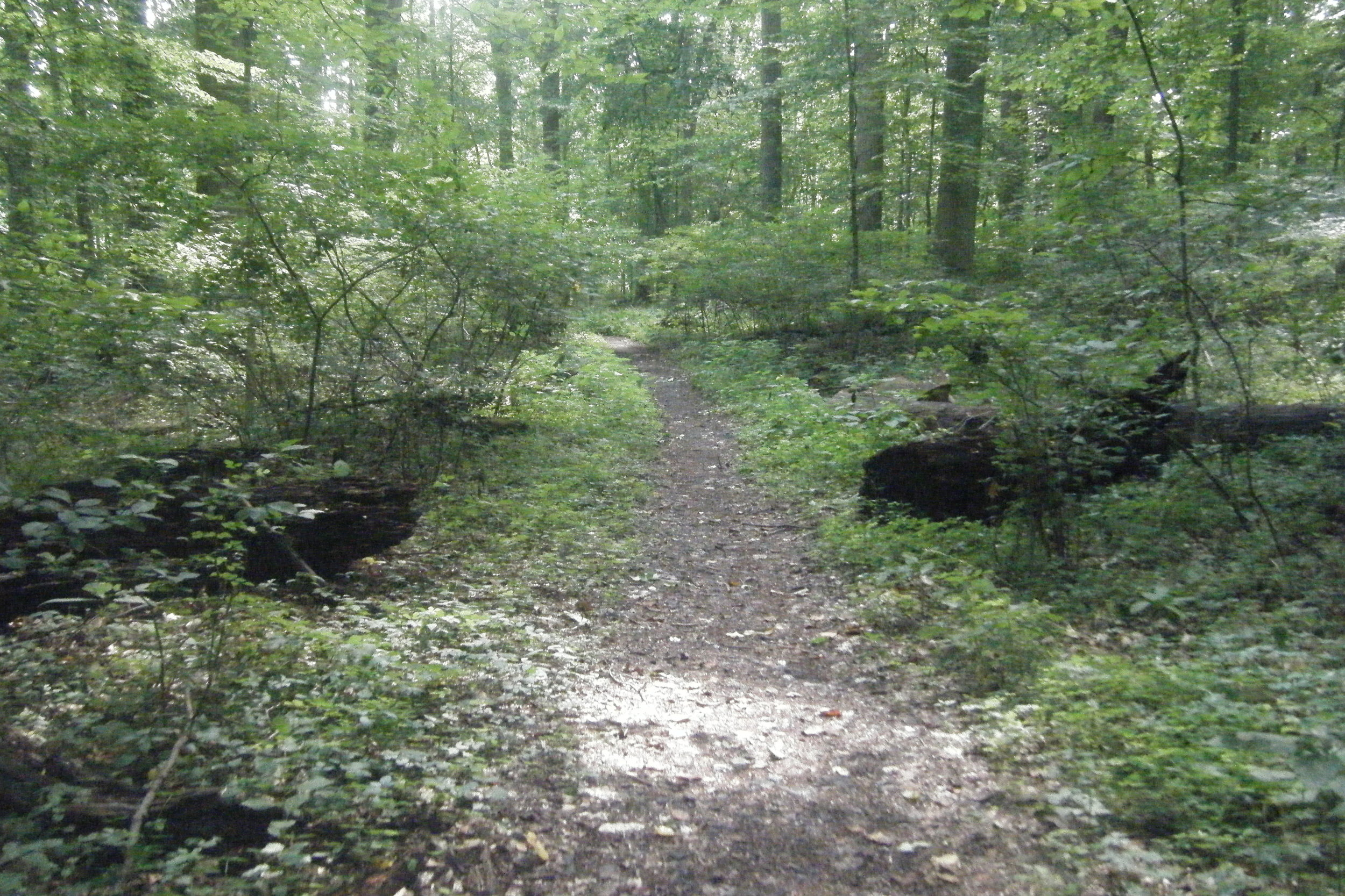 middle_of_trail.JPG