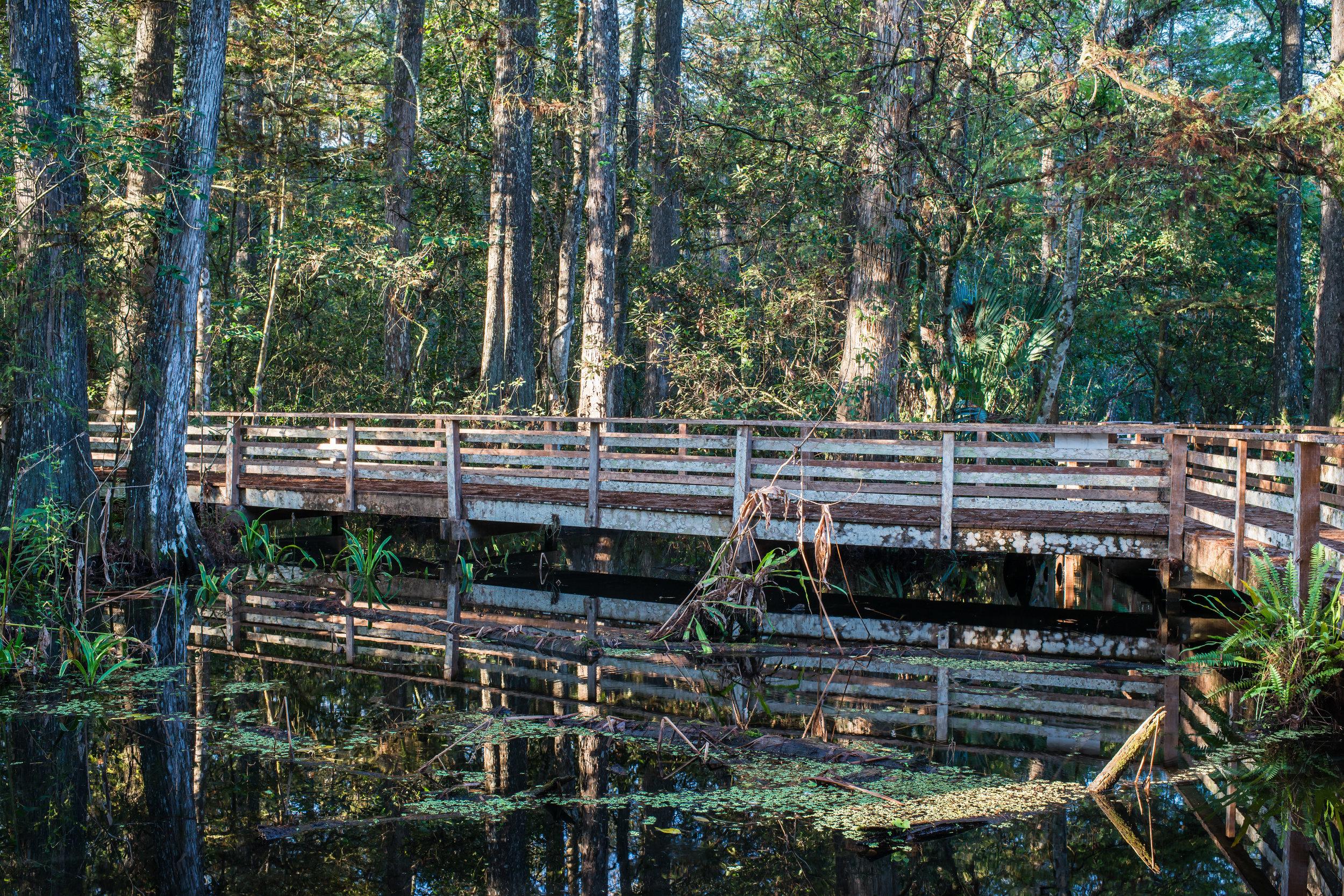 Boardwalk Habitat.jpg