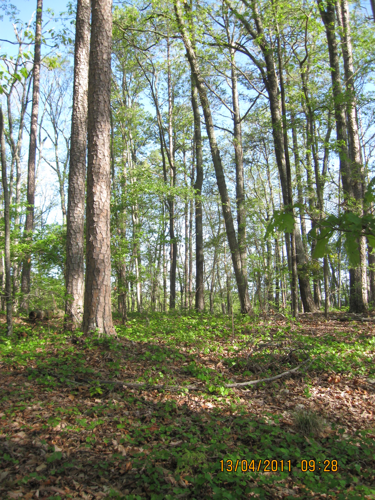 Marshall Forest.JPG