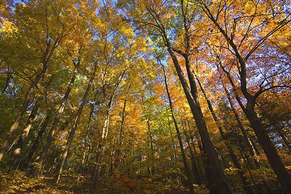 D 0521a Fall Trees.jpg