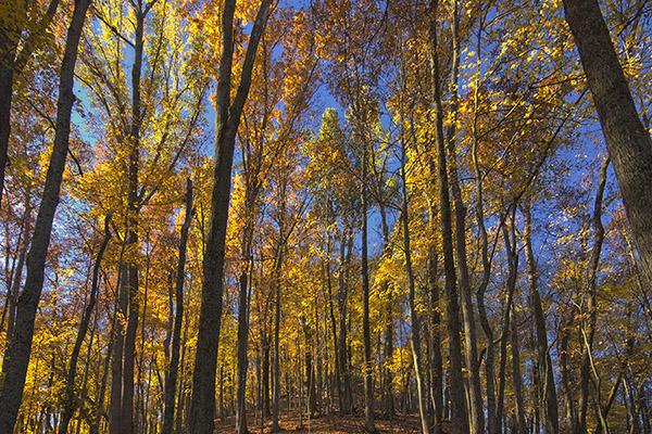 D 1210b Fall Forest.jpg