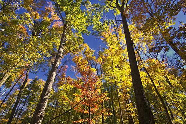 D 1215a Fall Trees.jpg