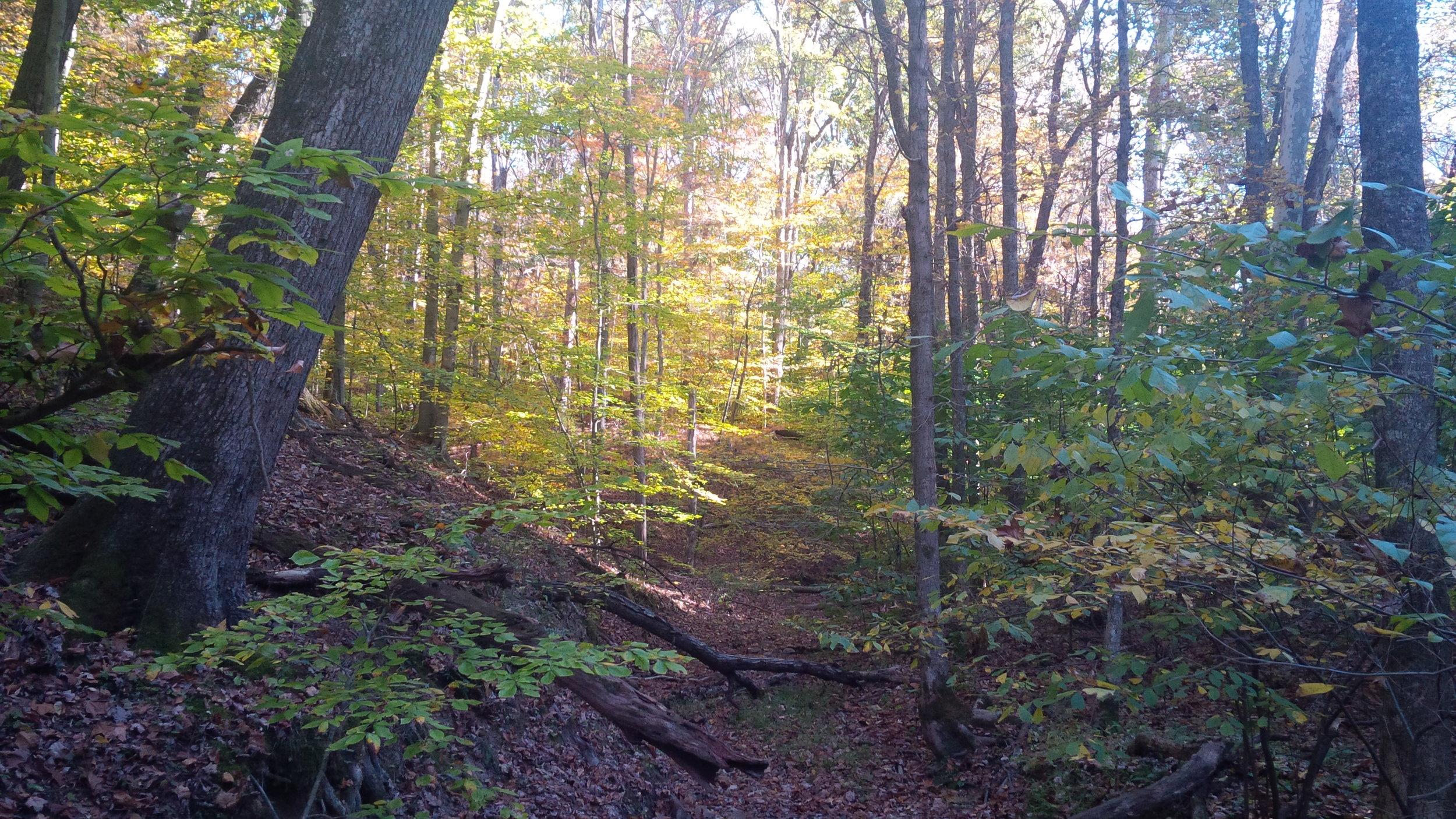 Hall Hollow (V-D) in Fall 10-26-14 Joel Thomas.jpg