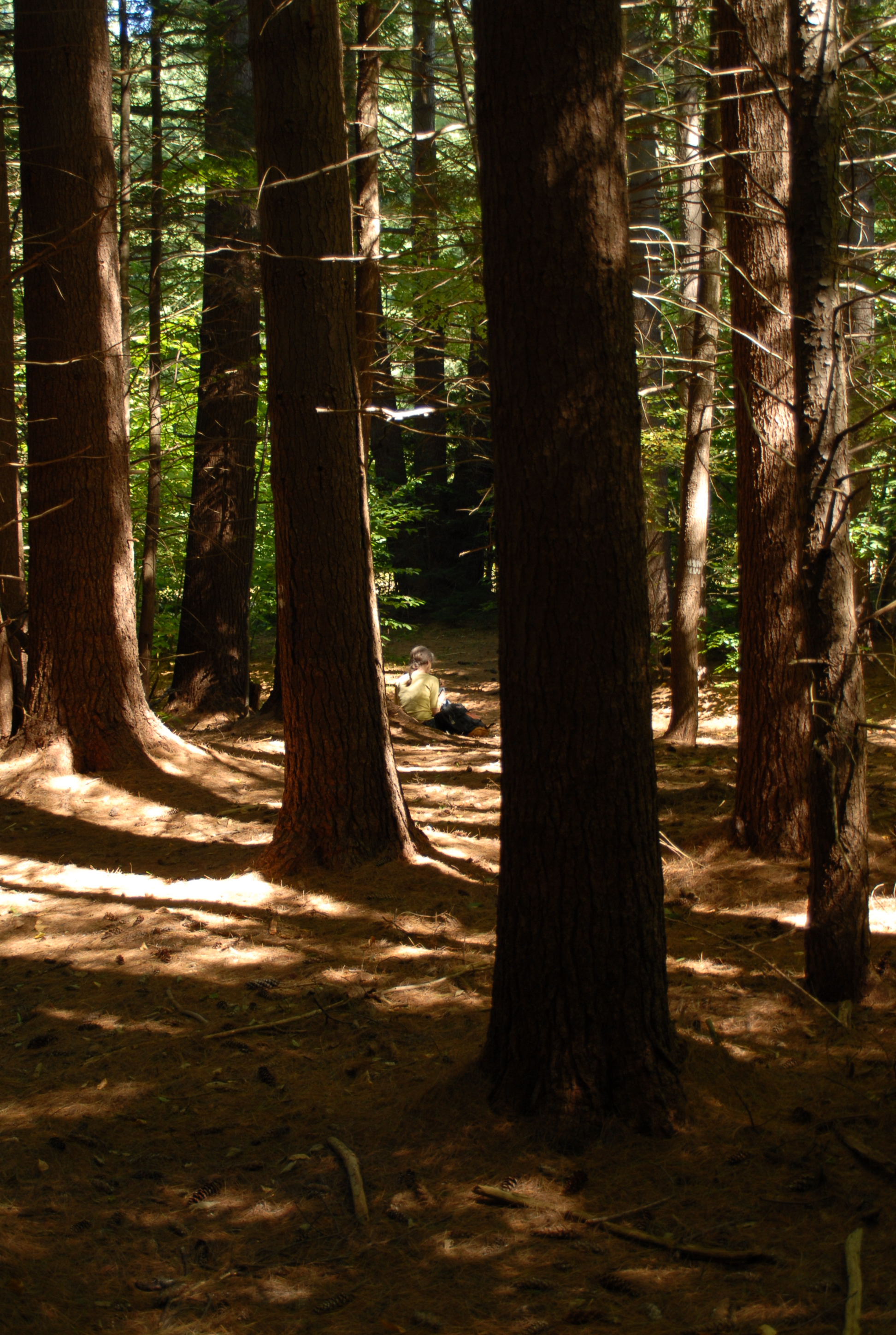 Mohawk Trail State Forest — Old Growth Forest Network