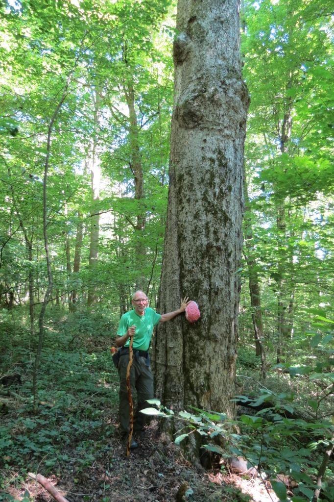 Steve McKee and big tree.jpg