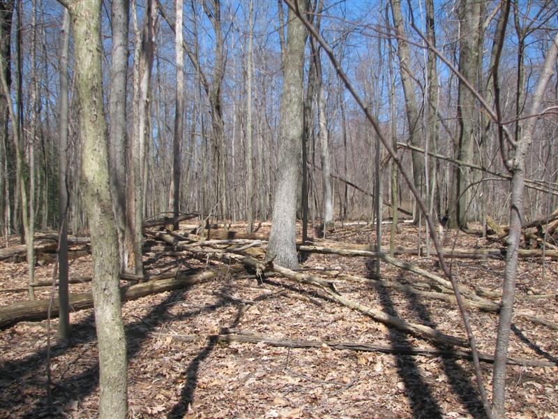 Tryon-Weber Woods Hill_15_forest_view N (Medium).jpg