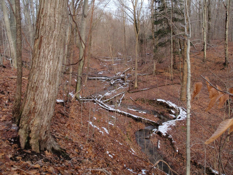 Tryon-Weber Woods Winter_03.jpg