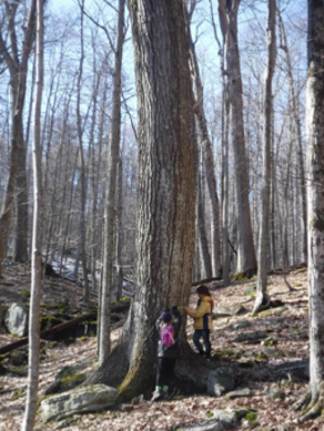 Tree Measuring at Holly River.jpg