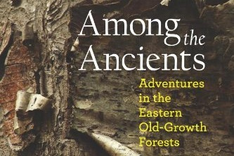 among the ancients - An immensely readable natural-history primer, Among the Ancients is also an adventure story and an impassioned plea to preserve and support the few untouched stretches of forest that remain. This series of lyrical essays is also a forest travel guide. It describes and provides maps and directions to a publicly-accessible old-growth forest in each of the 26 states east of the Mississippi River.