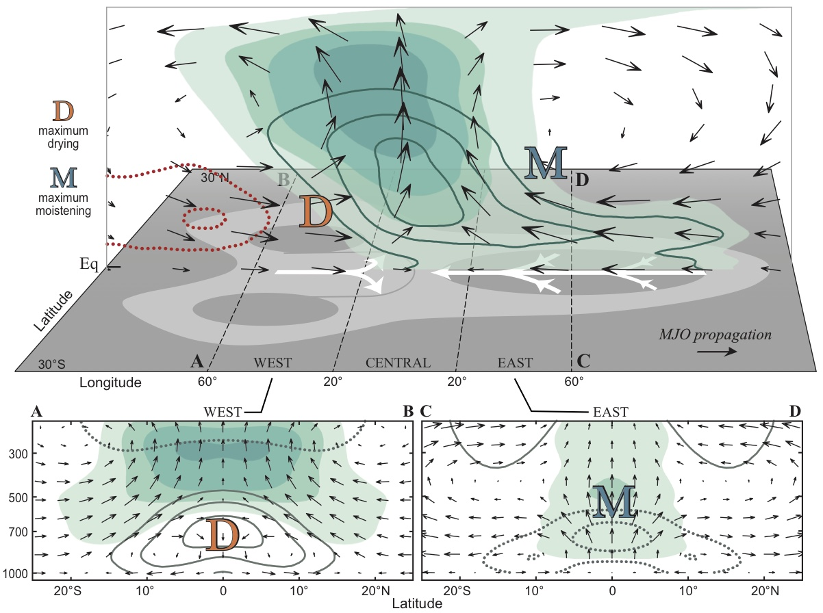 Figure:  Schematic of the three-dimensional structure of the MJO at the time it is active over the Maritime Continent (120°E). Contours correspond to the vertical structure of water vapor, shading corresponds to relative humidity and the gray plate shows the horizontal circulation near the surface. From  Adames and Wallace (2015)  .