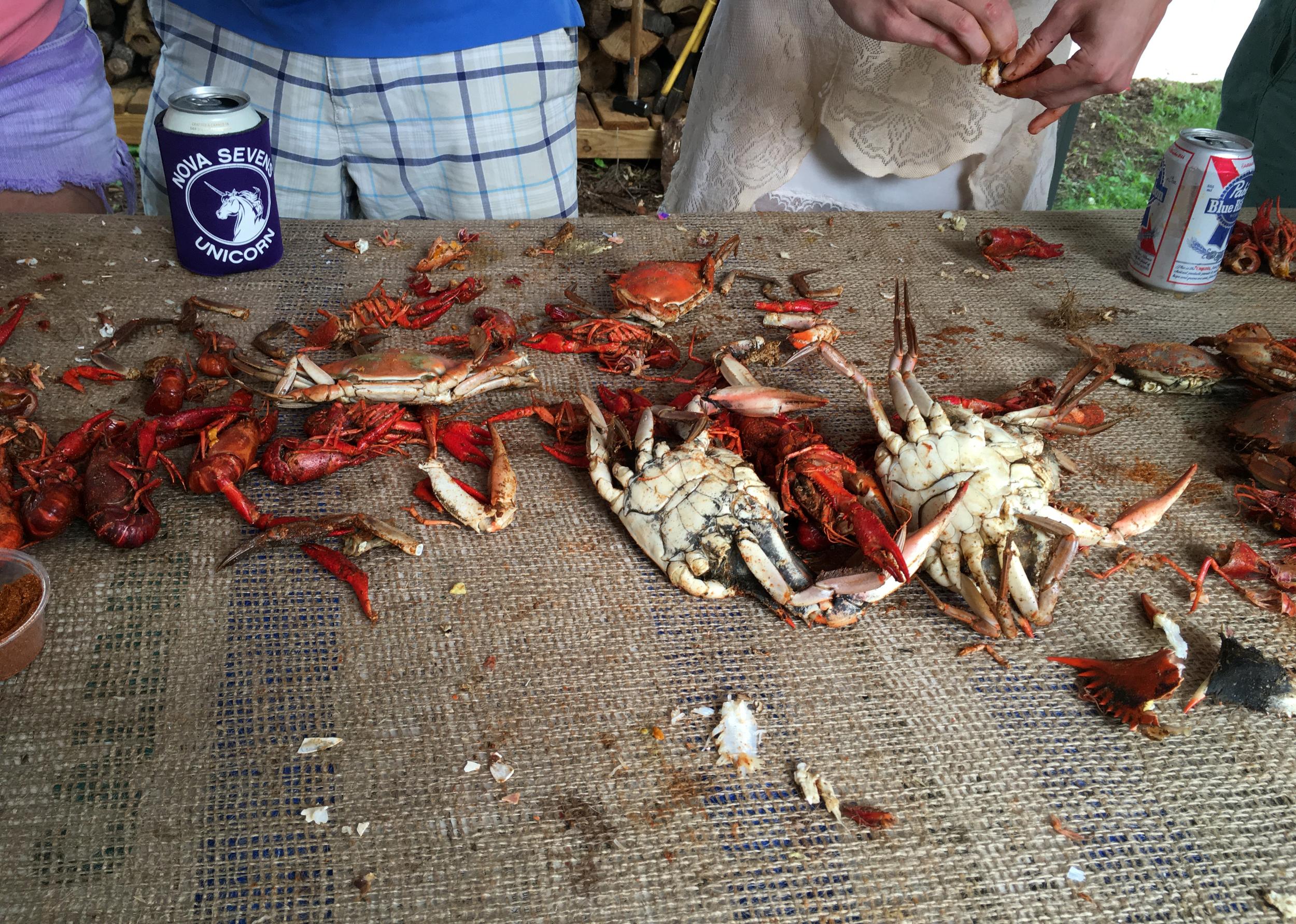 chesapeake crabs.png