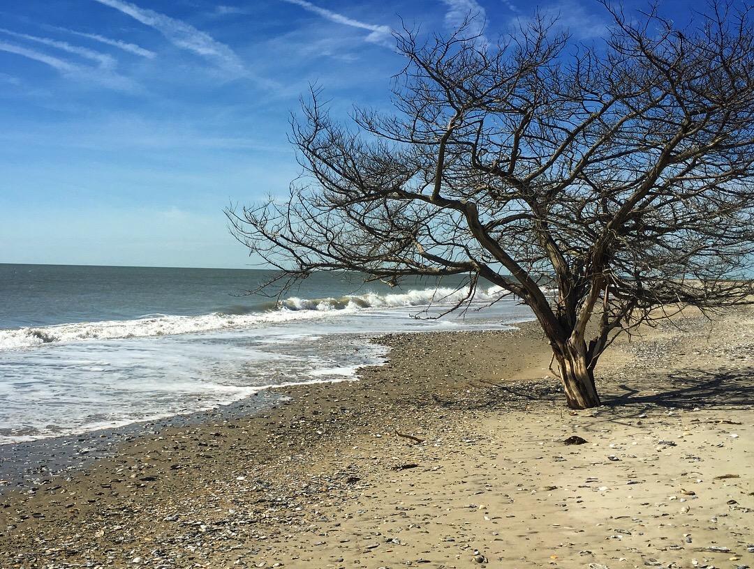 eastern shore va.jpg