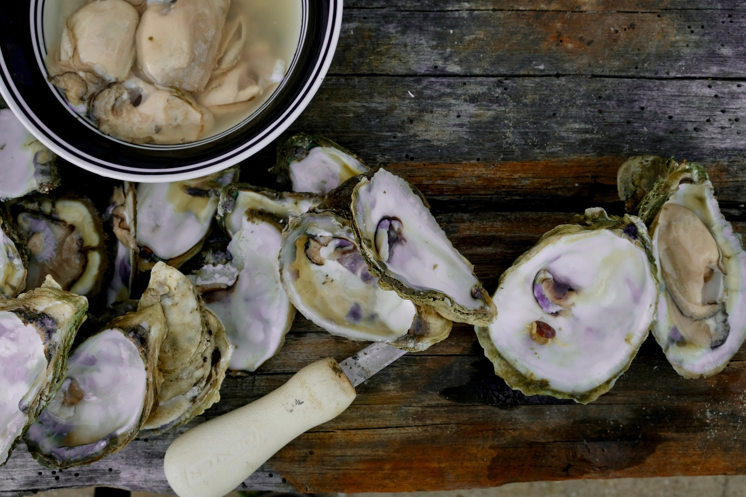 chesapeake bay oysters.jpg