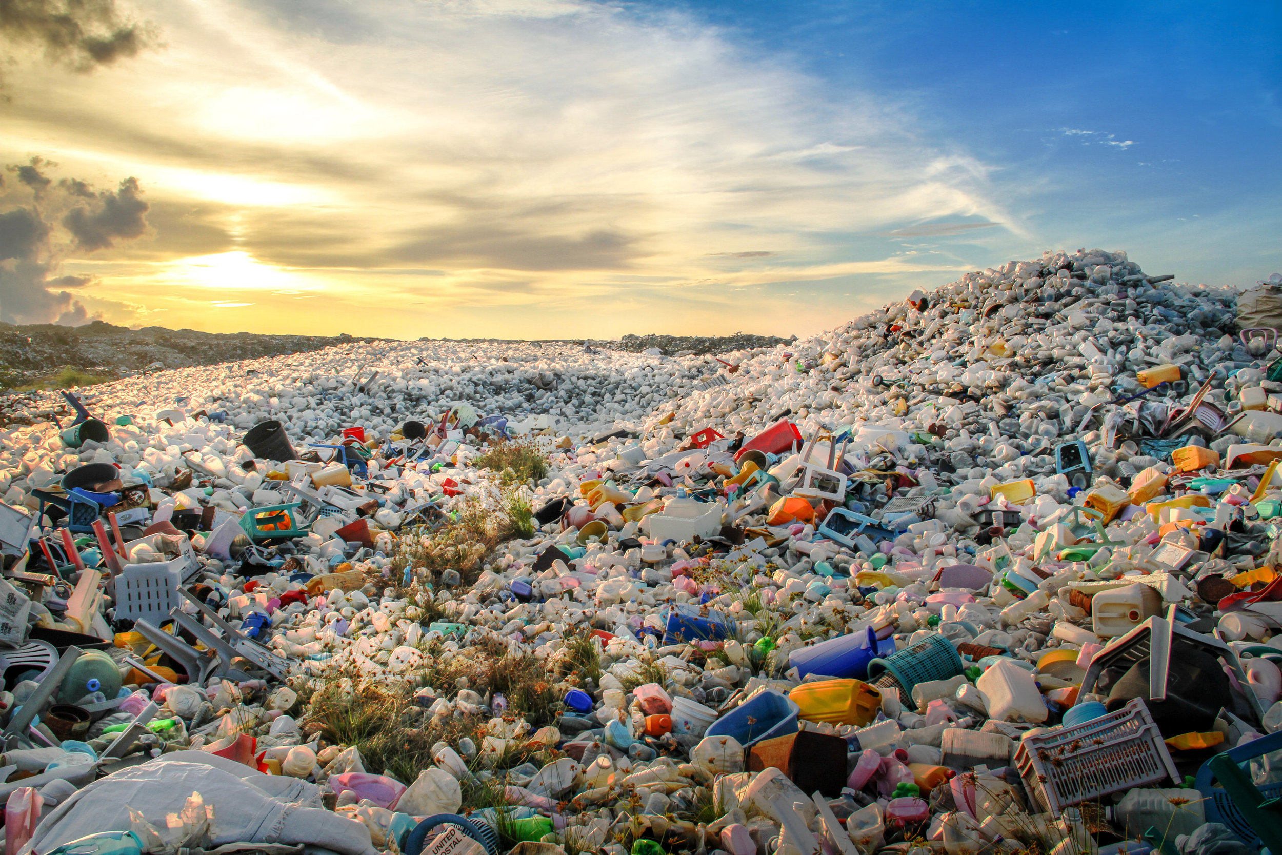 Plastic pollution is the leading cause of threat to wildlife right now.