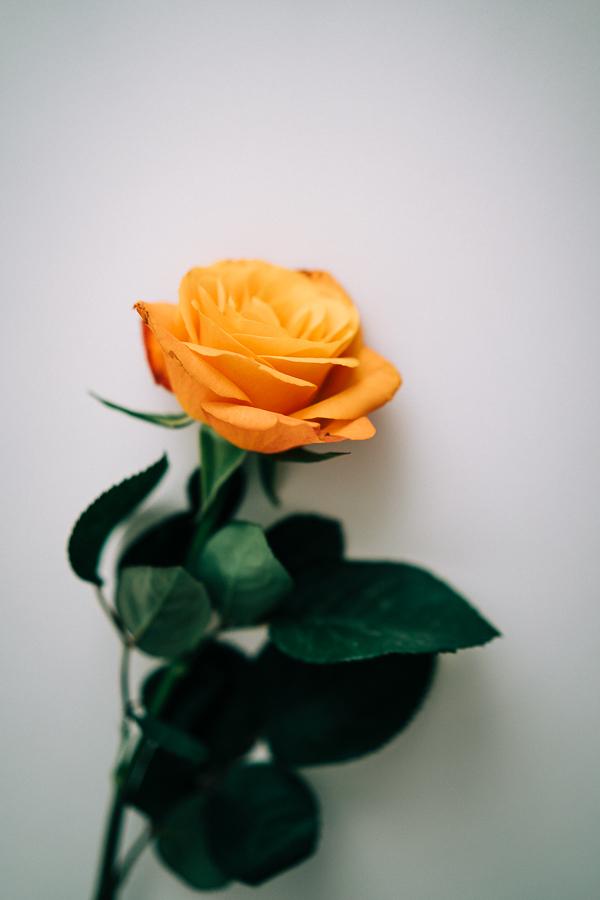 WEB Orange roses-1.jpg